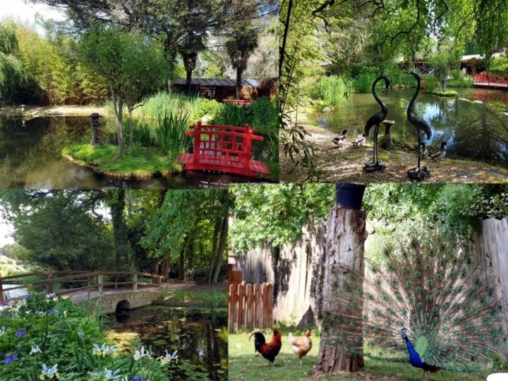 Que faire en Vendée : le Parc Floral de la Court d'Aron
