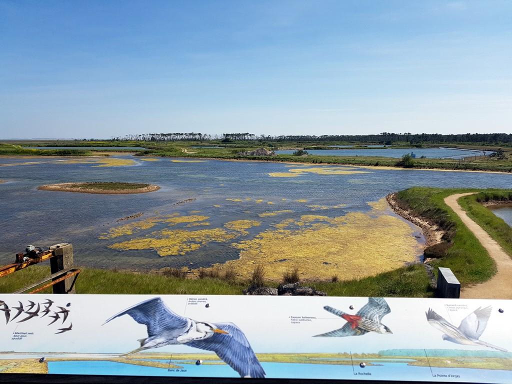 La Vendée : réserve naturelle de la Pointe d'Arcay