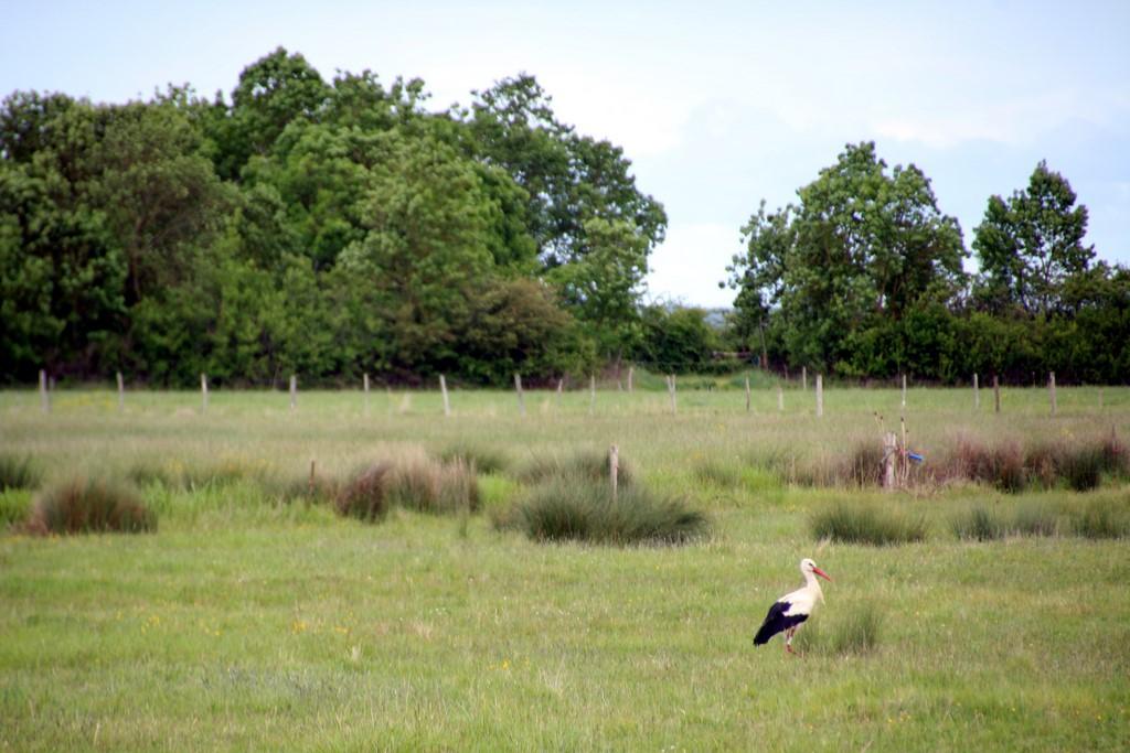 La Vendée : une cigogne