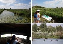 Que  faire dans l'Audomarois ? la réserve naturelle nationale des étangs du Romelaëre