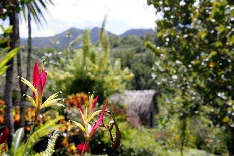 Hiver à la Martinique : Pani pwoblem, de belles fleurs