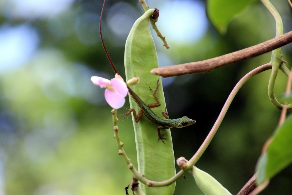 Hiver à la Martinique : Pani pwoblem, faune et flore