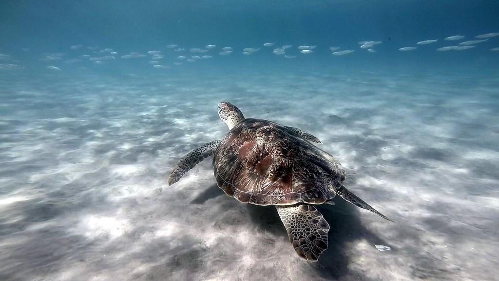 Hiver à la Martinique : Pani pwoblem, snorkeling et tortue