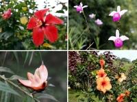Hiver à la Martinique : Pani pwoblem, la flore