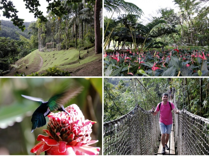 Que faire en Martinique : Le Jardin de Balata