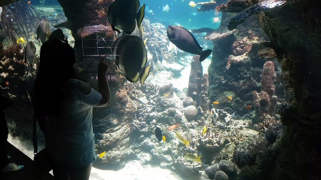 Grand Nausicaa : admirer les poissons