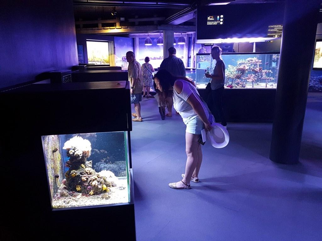 Grand Nausicaa : découvrir toutes sortes de poissons