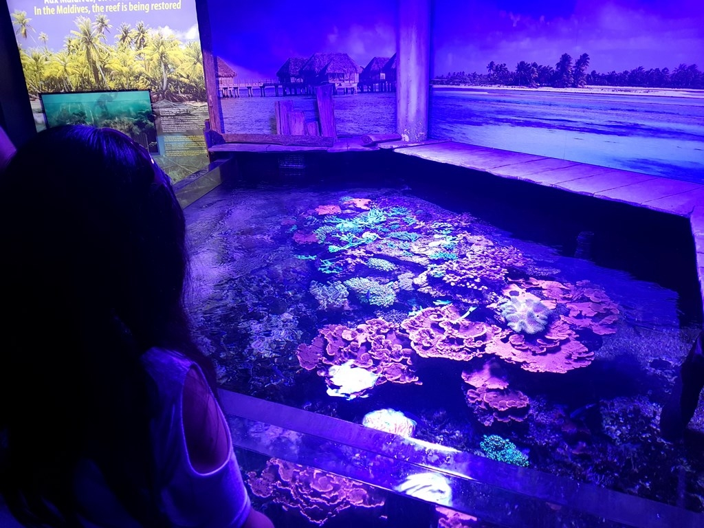 Grand Nausicaa : de magnifiques coraux