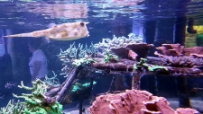 Grand Nausicaa : trouver des espèces insolites