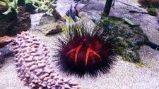 Grand Nausicaa : un monde sous-marin coloré