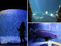Grand Nausicaa : Etre plongé dans le bleu de l'océan