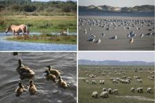 Près de Quend Plage : la faune des lieux