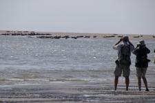 Prés de Quend Plage : observer les phoques