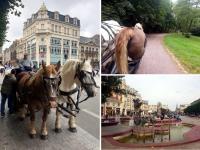 Découvrir Douai : tour en calèche