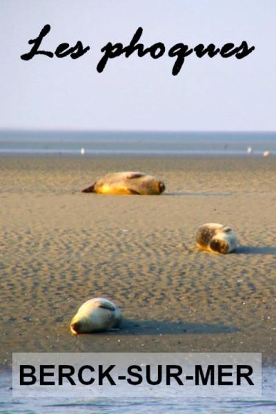 Berck-sur-Mer et les phoques