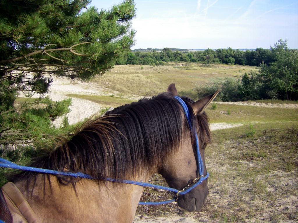 Que faire en Baie de Somme : balade à cheval