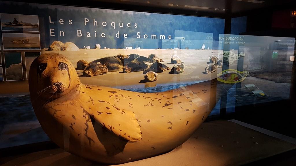 Que faire en Baie de Somme : Maison de la Baie de Somme