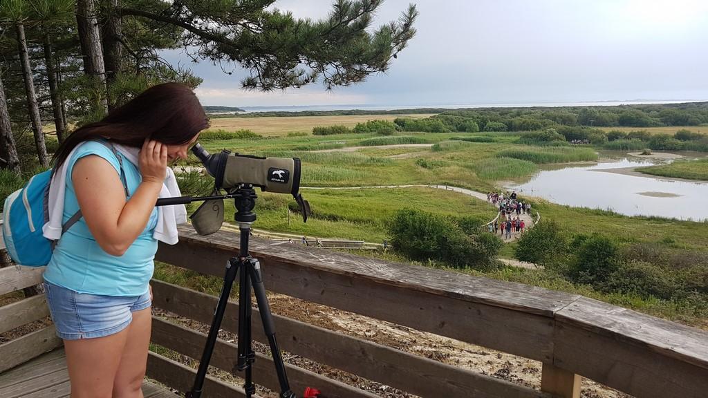 Que faire en Baie de Somme : Parc du Marquenterre