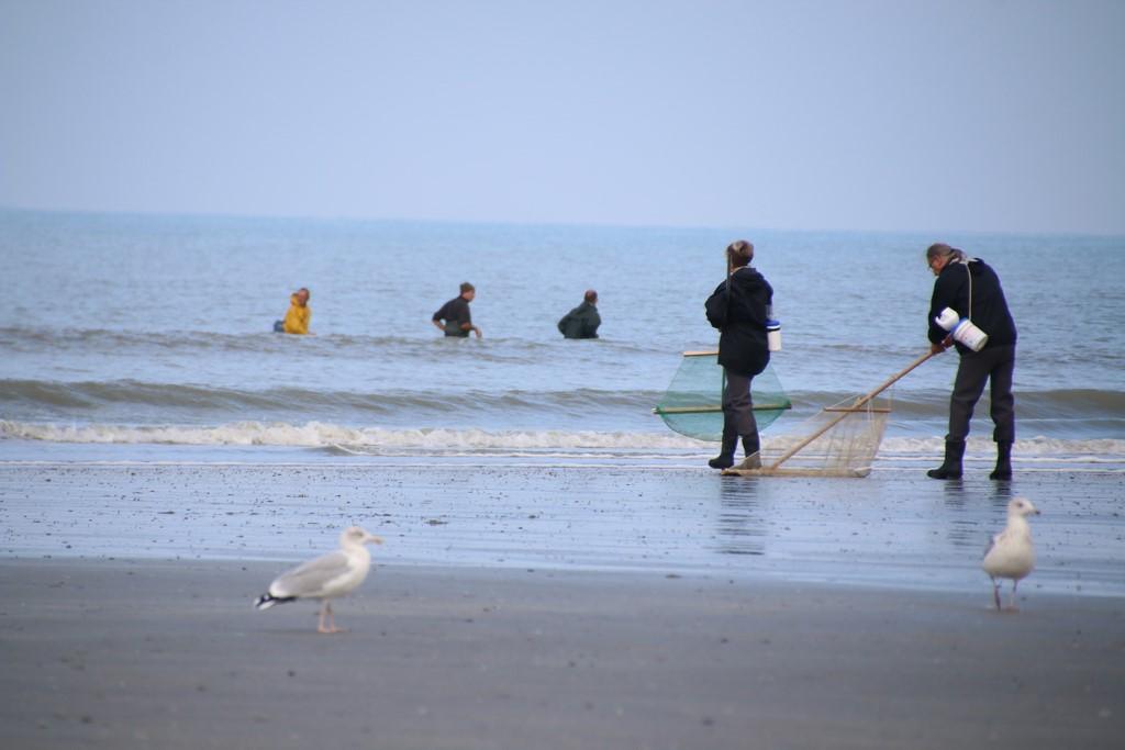 Que faire en Baie de Somme : faire la pêche à pied