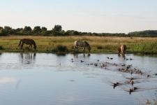 Que faire en Baie de Somme : découvrir le Marquenterre