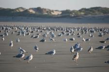 Que faire en Baie de Somme : aller voir les mouettes