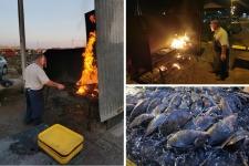 Au Pays de Royan : l'éclade de moules