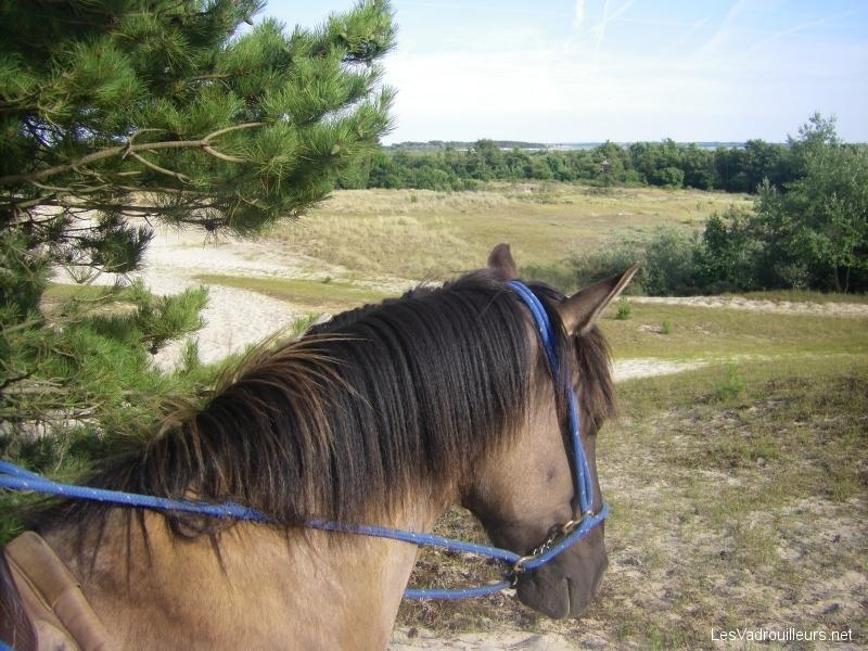 Faire une balade à cheval