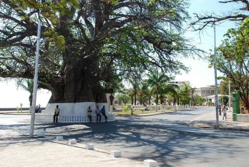 Le baobab de Majunga