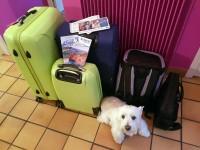 Voyage-SNCF-Les-bagages-et-le-toutou