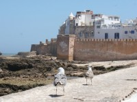 Excursion-à-Essaouira-au-Maroc