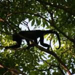 Souvenir inoubliable : sortie nature et découverte au Costa Rica