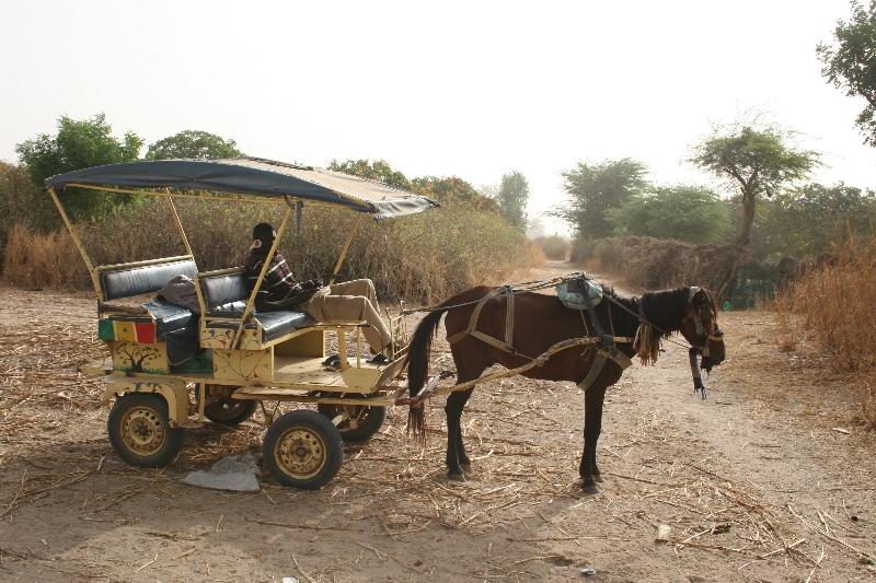 Excursion « Promenade en calèche » (Sénégal) : notre avis