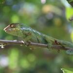 Que faire à La Réunion à part randonner ? 5 idées de visites