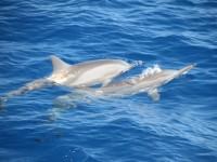 Rencontre-des-dauphins