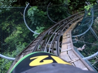 Rainforest-Bobsled