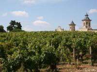 Vignes-du-Médoc